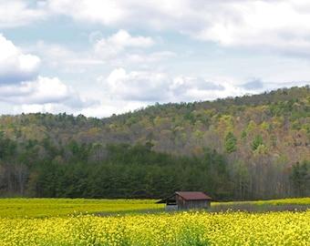 Blooming Barn
