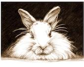 Art, Pencil Sketch, Rabbit Art, Rabbit Sketch, Bunny Pencil Sketch, Animal Drawing, Print of Original Art