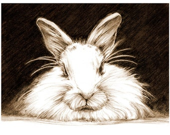 Art, Pencil Sketch, Rabbit Art, Rabbit Sketch, Bunny Pencil Sketch, Animal Drawing, Print of Original Art