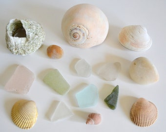 Sea Beach Decor Instant Collection Glass, Barnacle, Shells, Moonsnail, A Unique Salvaged Shelf Piece Set for Decoration from the Ocean!