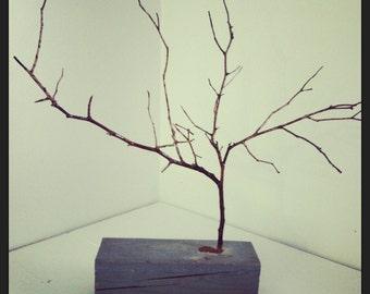 Tree Branch Display