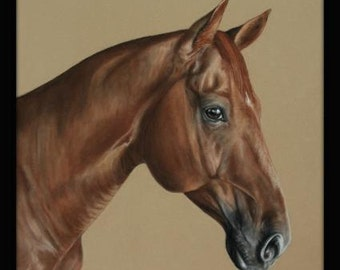 Horse Portrait  in pastel