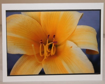 photo card, yellow lily, flower card,