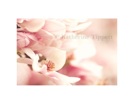 Magnolia, Nature, Spring Flowers, Pink