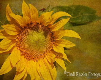 Sunny Yellow Sunflower, Photography,  Floral Photography