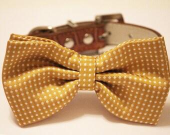 Dog Bow Tie -Mustard Bow tie attached to dog collar, Wedding Dog collar, dog birthday gift, dog bow, dog lovers,wedding accessory,polka dots