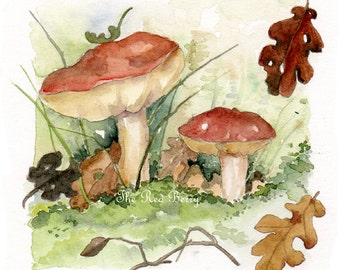 how to get into mushroom picking