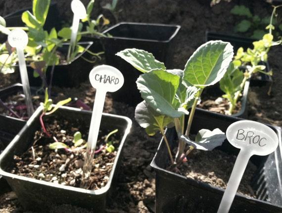 Reusable Plant Stakes Garden Stakes Garden By
