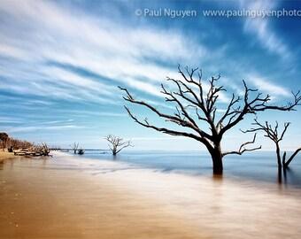 Dead Tree photograph, Boneyard, Edisto Island, South Carolina.  10x15 print matted on white 16x20 mat. Beach, dead trees forest ocean