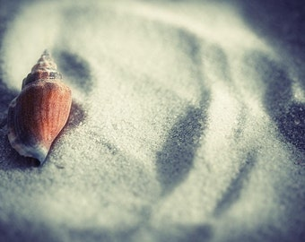 beach shell fish fine art photography fathers day for her him child nursery sand