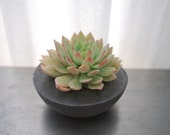 Concrete Succulent Planter- Succulent Holder - Concrete Pot - Garden Center Piece - AnsonDesign