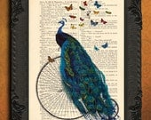 Peacock print - Peacock art - peacock illustration