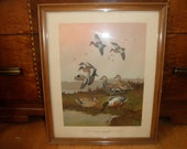 "Lynn Bogue Hunt Framed Print: ""Cinnamon Teal, American Widgeon, Gadwall and Shoveller"""