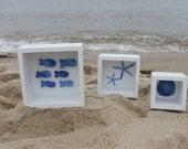 Sand Dollar, School of Fish, Starfish  Shadowboxes, Cottage Decor (Set of 3), SALE