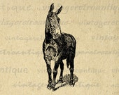 Printable Mule Horse Graphic Download Donkey Image Digital Vintage Clip Art for Transfers Making Prints etc HQ 300dpi No.3064