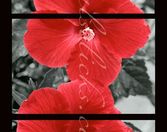 3 Piece Print Set, Red, Flower Photograph, Red Hibiscus, Fine Art Photography, Digital Art, Home, Office, Wall Decor, Tabletop decor, Art