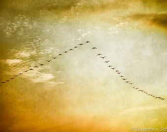 Image result for geese flying in a v'