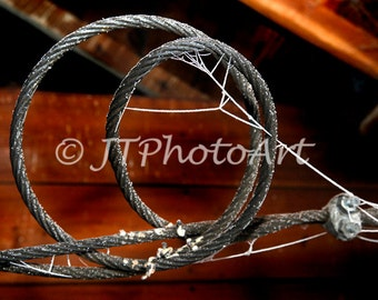 Coiled steel cable-frozen spider web, 8x10 fine art print