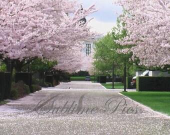 Spring in Salem