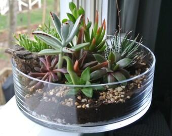 The Grande Green - Succulent Terrarium, DIY Centerpiece , Planter, Wood, Gift, Indoor Garden