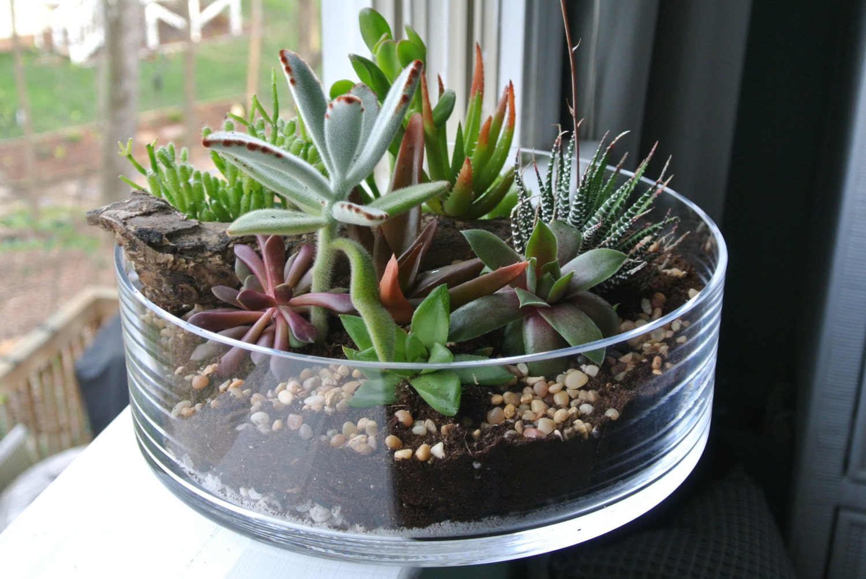 The grande green succulent terrarium diy centerpiece Planters for succulents
