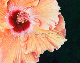 """Hibiscus - 8"""" x 8"""" Matted Art Print of an Original Colored Pencil Drawing"""