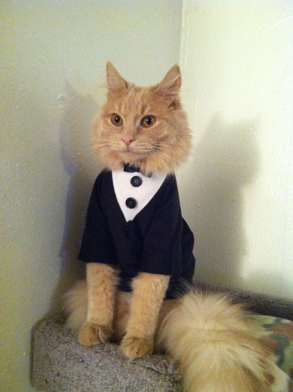 tuxedo cat cat clothes by catclothing on etsy