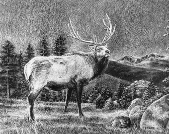 """Lithograph print """"Majestic Elk"""" A pen and ink on scratchboard drawing of an elk in the Rocky Mountains"""