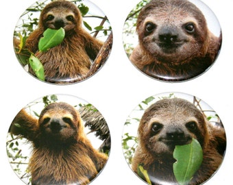 Super Cute SLOTHS - Set of 4 Large Fridge Magnets