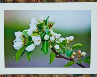 Blooming Cherry (6 cards)