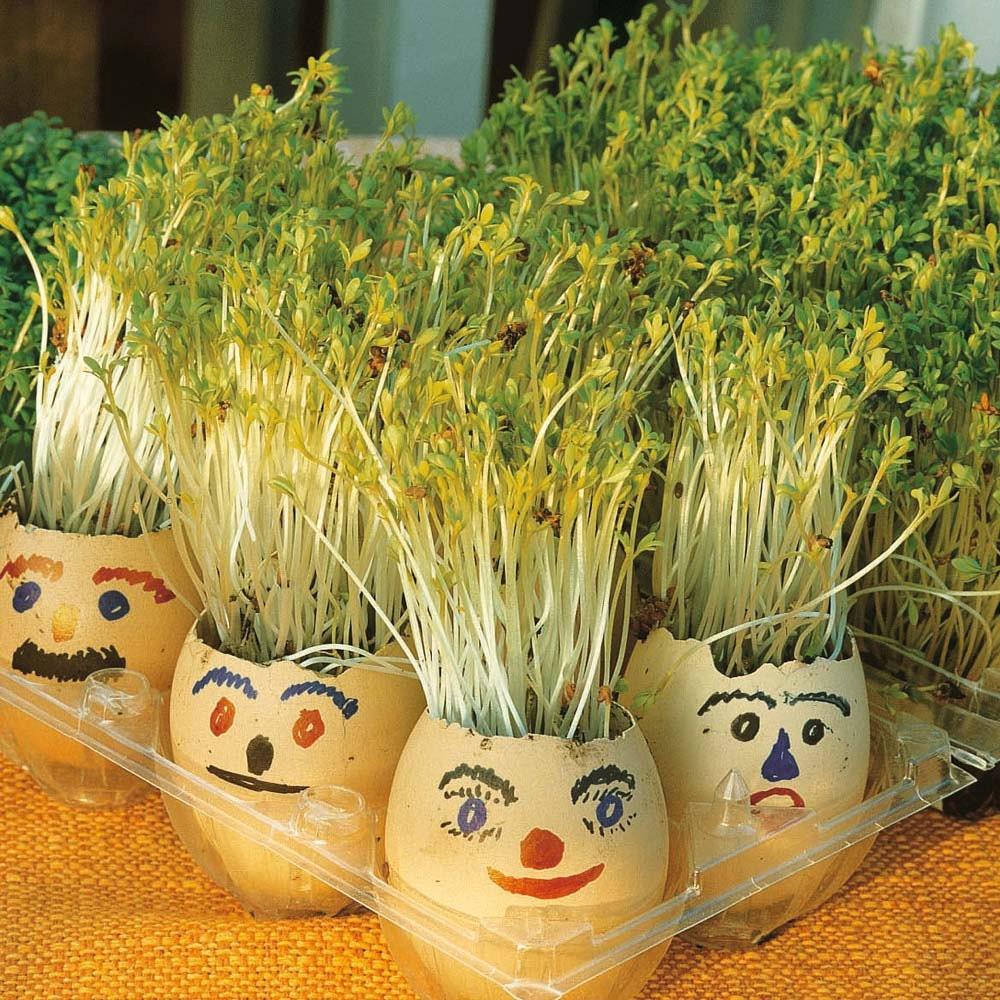 5g appr 1800 garden cress seeds LEPIDIUM SATIVUM valuable