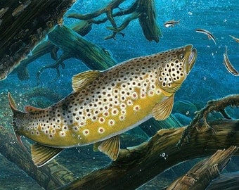 Interceptor  Brown trout and Blacknose dace  20x16 print