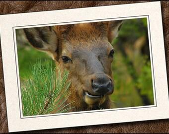 3 Elk Photo Note Cards - Elk Note Cards - 5x7 Elk Cards - Blank Wildlife Cards - Wildlife Greeting Cards (IN73)