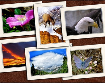 6 Nature Photo Note Cards - 5x7 Nature Note Card - Blank Note Cards With Envelopes - Nature Greeting Cards Handmade (GP85)