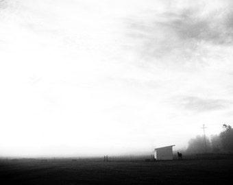 Black & White Photography - Horse in Countryside at Dawn - fine art print wall photo home decor rural farm field sunrise mist fog