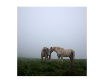 Foggy landscape with horses - Fine art photograph - 8 x 8 inch print