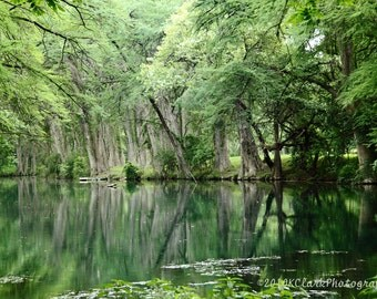 The Cypress Sirens Fine Art Photography Texas hill country river reflections nature green cool Cypress trees Western home decor wall art