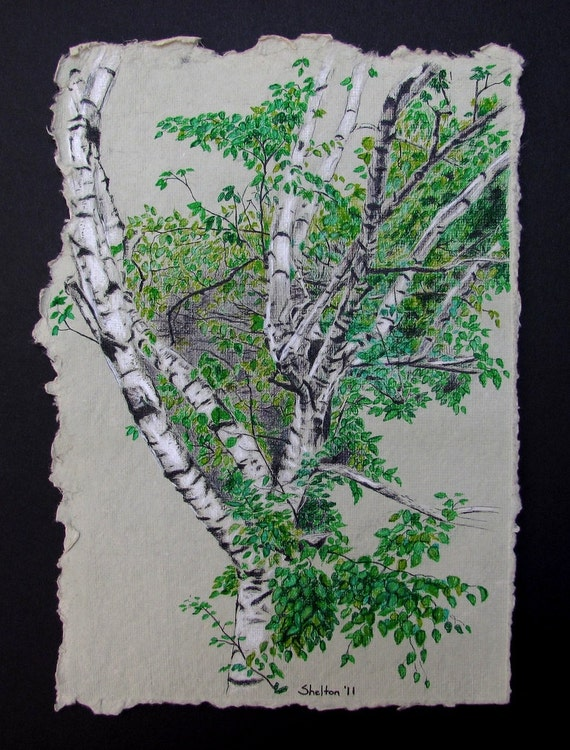 Spring Birch - 2011 - 6 3/4 x 10 - Ink and Colored Pencil on Paper
