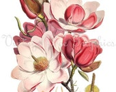 Items similar to Antique Magnolia Botanical Flower Digital