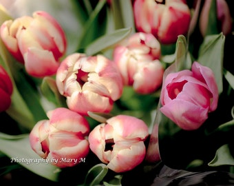 Floral Photography, Nature Photograph Floral Tulips Art Print  Spring bouquet, Soft Dreamy Romantic  Pink Flowers Home Decor, Wall Art