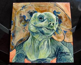 Ali the Aldabra Tortoise
