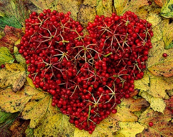 Photo Card, Heart of Guelder Berries and Leaves, Greeting card, Square, blank inside for your message
