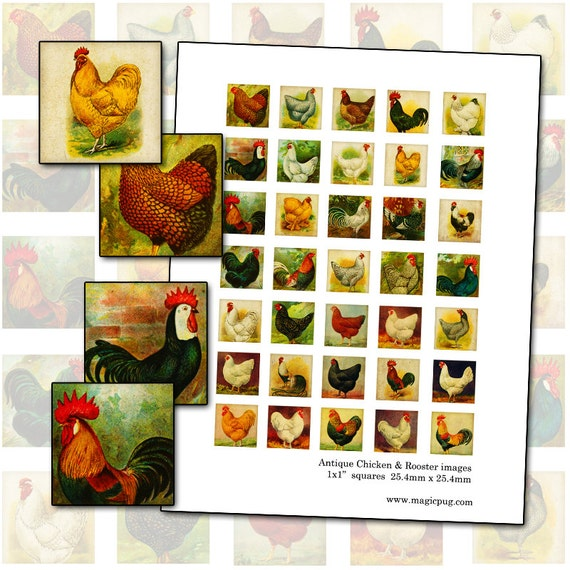 Antique Chicken Rooster and Hen inchies 1 inch square digital collage sheet 25.4mm farm barn fowl poultry nature agriculture 1x1