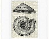 vintage solium shell print