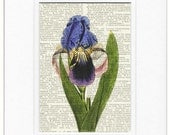 Iris flower dictionary page print