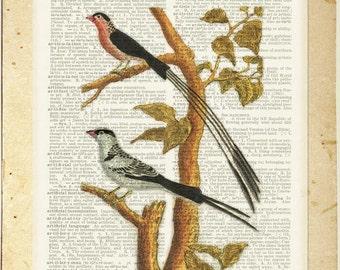 Birds I dictionary page print