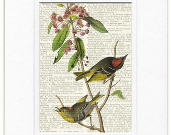 birds - Kinglet print
