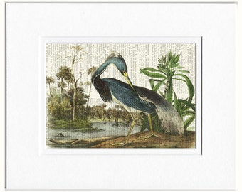 Heron Print, Audubon TriColored Heron
