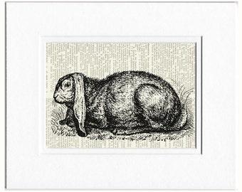 rabbit I dictionary page print