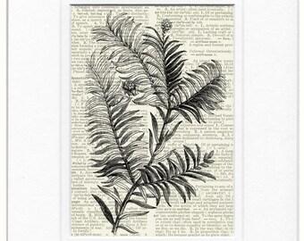 Prince Albert yew plant print
